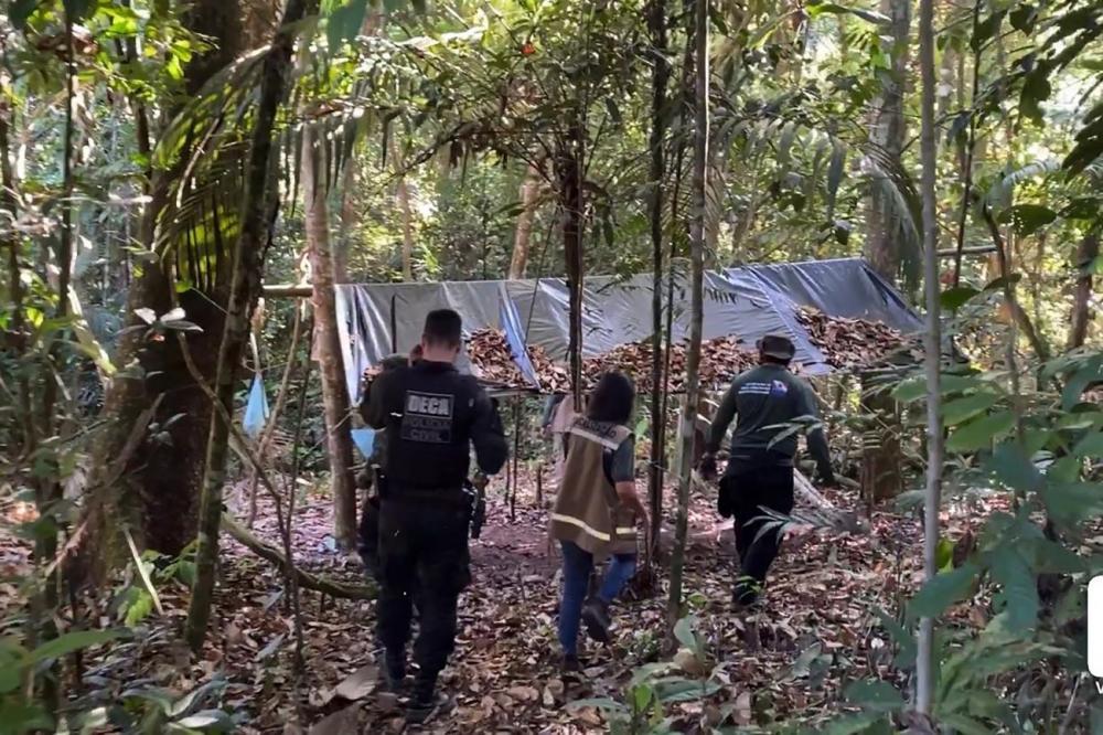 A Operação Amazônia Viva está combatendo crimes ambientais no sudoeste paraense. (Foto: Agência Pará)